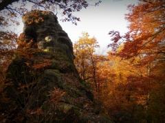 Rosenkohl: Herbstimpression