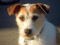 Graziella: Porträt eines Hundes