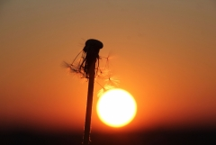 Sylke: Sonnenaufgang