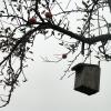 Apfelbaum im Herbst