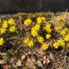 Frühling im Februar 19 (3)