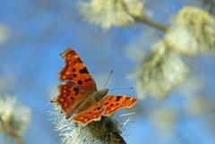 Sylke: Schmetterling im Frühling