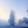 Jomo: Bäume im Winternebel