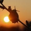 Sylke: Schnecke bei Sonnenaufgang