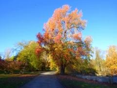 Bussi: Herbstfarben
