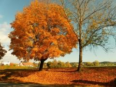 Graziella: Goldener Oktober